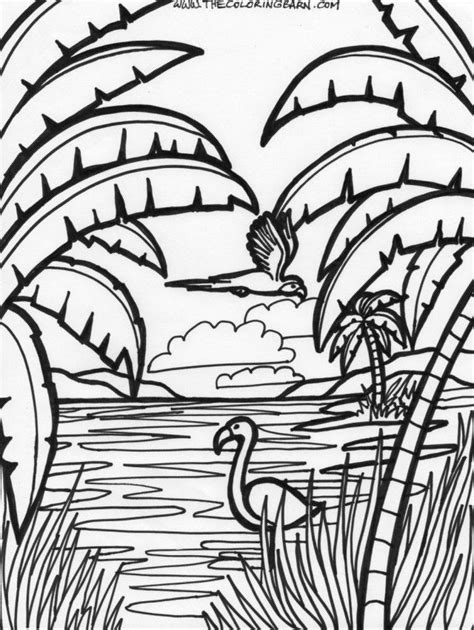 rainforest animals coloring pages coloring home