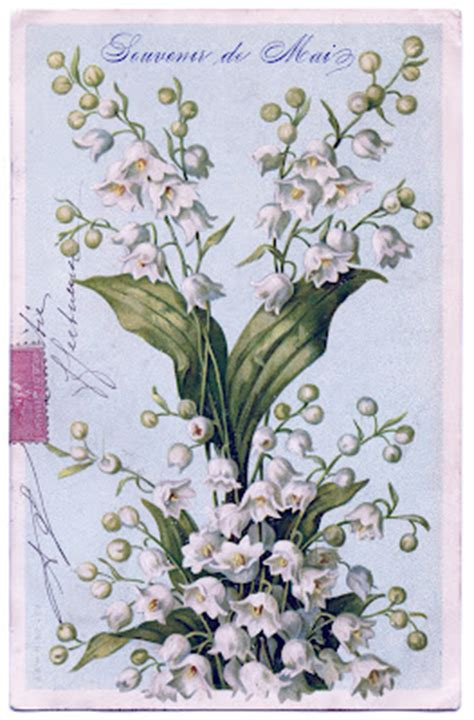 gorgeous french lily   valley image  graphics fairy