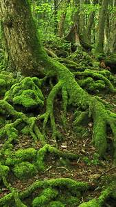 The 34 Most Beautiful Forests In The World U2026 I U2019d Love To