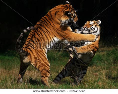 Animals Fighting Each Other