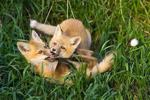 Edmonton Wildlife Photography Class