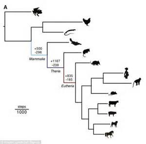 Why Humans Don U0026 39 T Lay Eggs   U0026 39 Jumping U0026 39  Genes Were The Origin Of Pregnancy In Our Early Mammalian