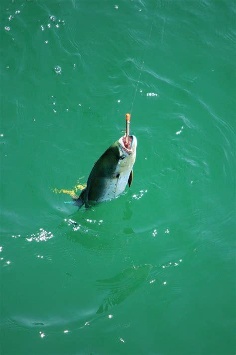 pensacola beach gulf fishing florida pier fun fish jack cravel