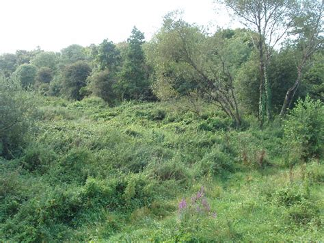 file bushes and trees by black water at kilmacow geograph org uk 1479609 jpg