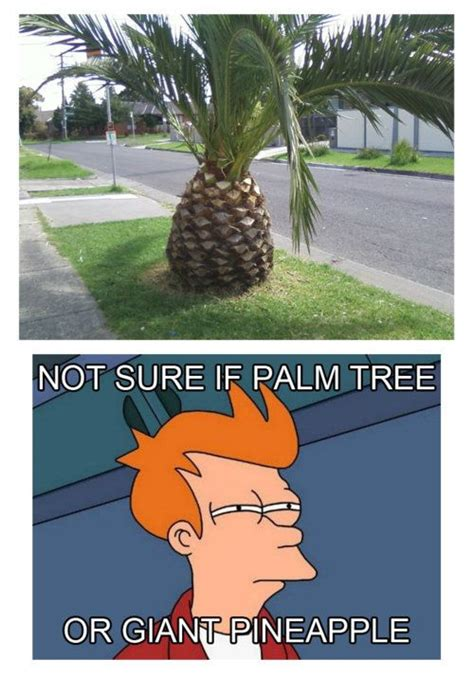 Pineapple Memes - palm tree or giant pineapple hahaha laughter is the best medicine pinterest jokes too