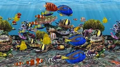 Aquarium Fish Dvd Screensaver 3d Screensavers Tank
