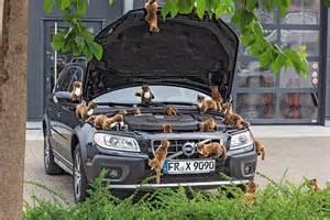 gerüche neutralisieren auto mit hochspannung gegen marder so funktioniert 39 s bilder autobild de