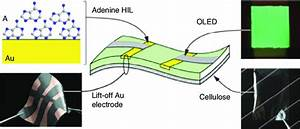 Device Structure Of An Oled With Cellulose Substrate  Gold