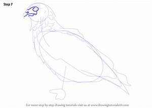 Learn How to Draw a Bateleur Eagle (Birds) Step by Step ...