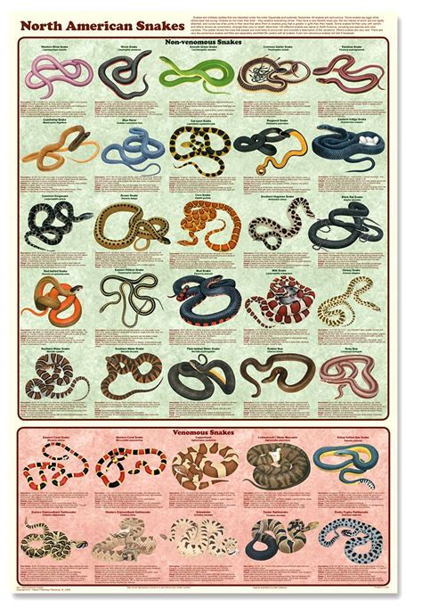 snake bite  aid poster north american snakes poster