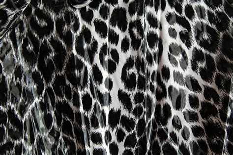 leopard pattern black  white  photo  pixabay
