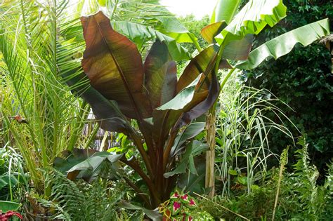 world garden plants plants for a jungle style border gardenersworld com