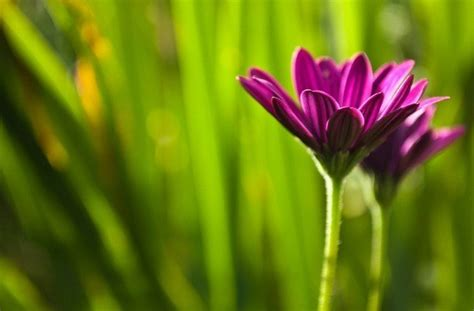 depth  field  floral photography