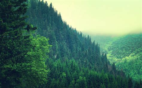 pine forest hd wallpapers for pc desktop wallpapers high