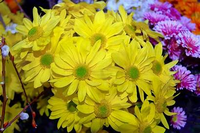Flowers Yellow Wallpapers Background Desktop Flower Spain