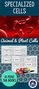 Specialized Cells Tab Books  With Images
