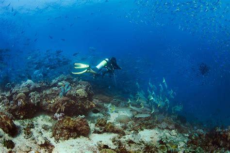Raja At Dive - papua paradise eco resort diving