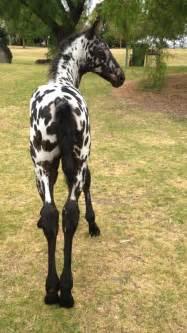 images animals horses pinterest arabian horses dressage