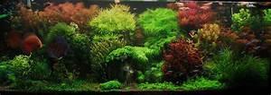 Pflanzen Im Aquarium : aquarium dekoration pflanzen ~ Michelbontemps.com Haus und Dekorationen