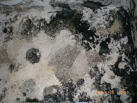schwarzer schimmel wand wasserschaden sanieren vdl dem wasserschadensanierer