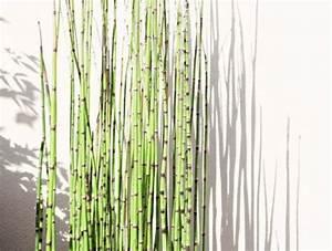 Bambou A Planter : les 25 meilleures id es de la cat gorie planter bambou sur ~ Premium-room.com Idées de Décoration