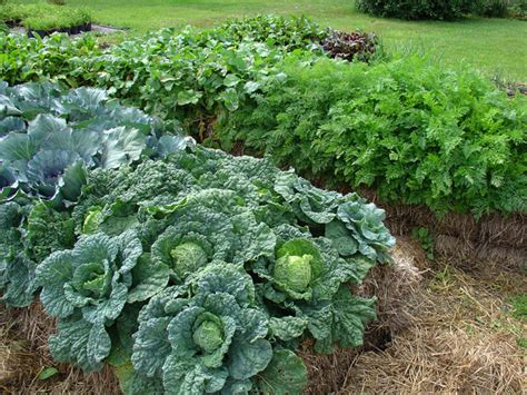 straw bale gardening fertilizer poor soil consider straw bale gardening mercury news