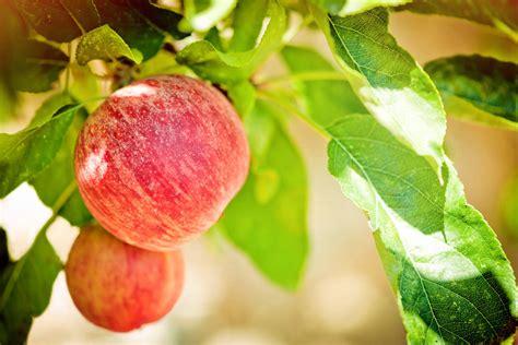 Washington Apple Commission