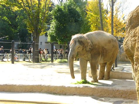Open image in a new tab for full size. elephant.. elephant.. | Flickr - Photo Sharing!