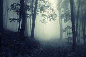 forest deep trees creepy nature landscape misty road foggy ...