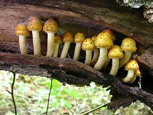 Decomposers: Fungi | Capitol Hill Science 7