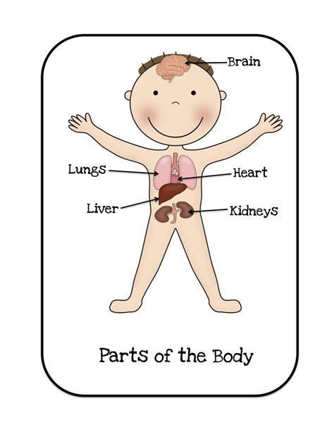 preschool printables organs healthy me preschool 818 | 38d8b89e3d8344c32c57921d8ebbb814