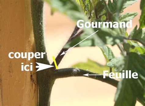 planter des tomates en ville macadam gardens