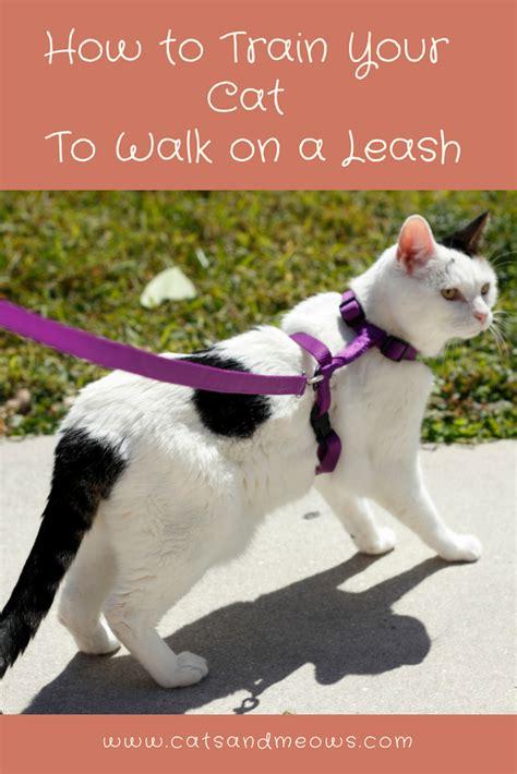train  cat  walk   leash cats  meows