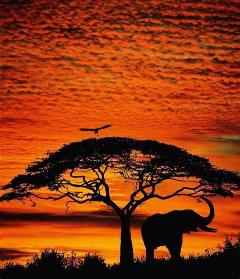 elephant silhouette sunset painting elephant sunset elephants sunsets