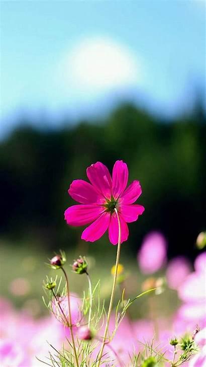 Iphone Floral Backgrounds Flower Pixelstalk 6s