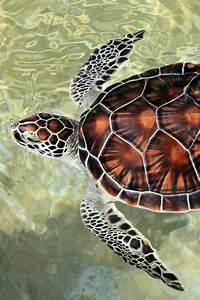 tortuga carey animales acuáticos animales marinos