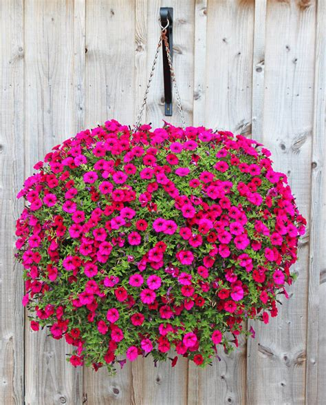 hanging basket flowers 70 hanging flower planter ideas photos and top 10