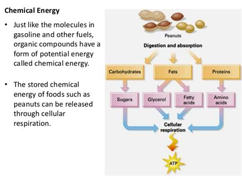 2016 cellular respiration and photosynthesis