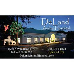 deland animal hospital deland animal hospital in deland fl 386 734 1