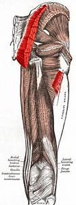 Human Anatomy  Gross Anatomy
