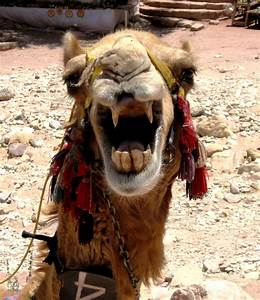 Ich Will Nicht Aufstehen : ich will nicht zum zahnarzt foto bild tiere natur bilder auf fotocommunity ~ Markanthonyermac.com Haus und Dekorationen