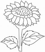 Sunflower Coloring Flower Printable Line Drawing Kansas Sheets Sunrise Flowers Sun Sunflowers Clipart State Wild Colouring Clip Cliparts Preschool Library sketch template
