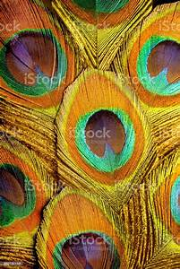 Colorful, And, Luminous, Macro, Photo, Of, Peacock, Feathers