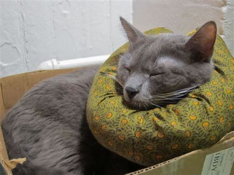 Cat E Collar Alternative