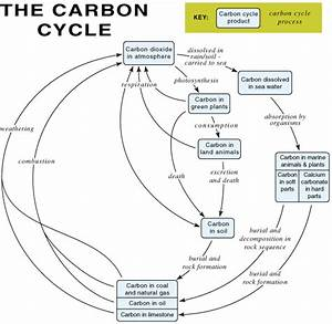 Carbon cycle: exchanging carbon dioxide between the ...