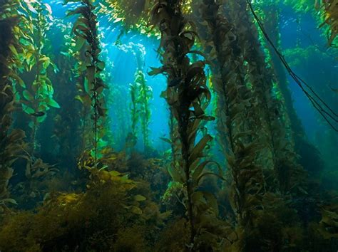 beach plants kelp forests beach wrack living lightly