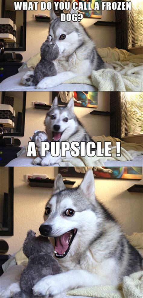 Pun Husky Meme - 15 pun husky meme jokes are insanely cute dose of funny