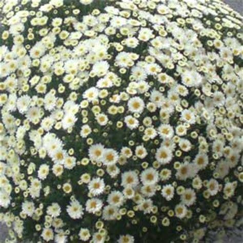 Das Blümchen: Saisonale Floristik - Frühling, Herbst