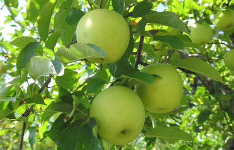 tile setter salary australia 100 pumpkin patch near greenville nc 20 apple