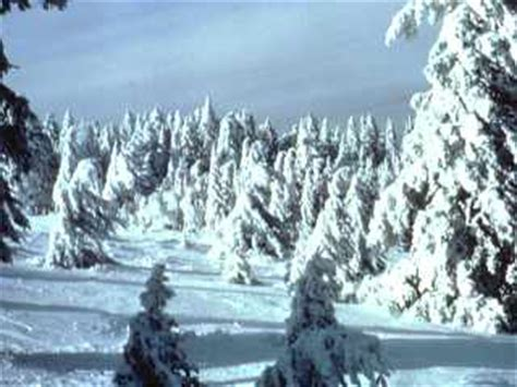 climate  boreal forest